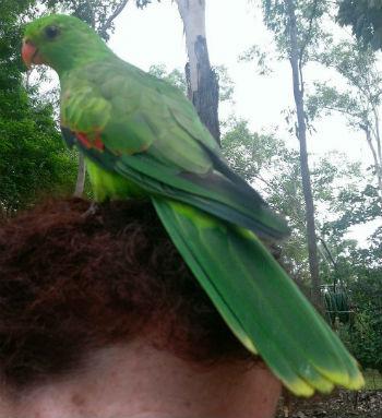 parrot green.jpg